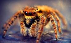Kahve Falında Örümcek Görmek