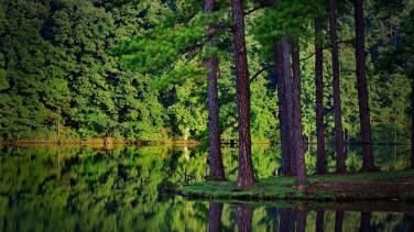 Rüyada Çam Ağacı Görmek