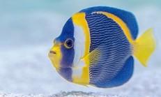 Rüyada Mavi Balık Görmek