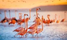 Kahve Falında Flamingo Görmek