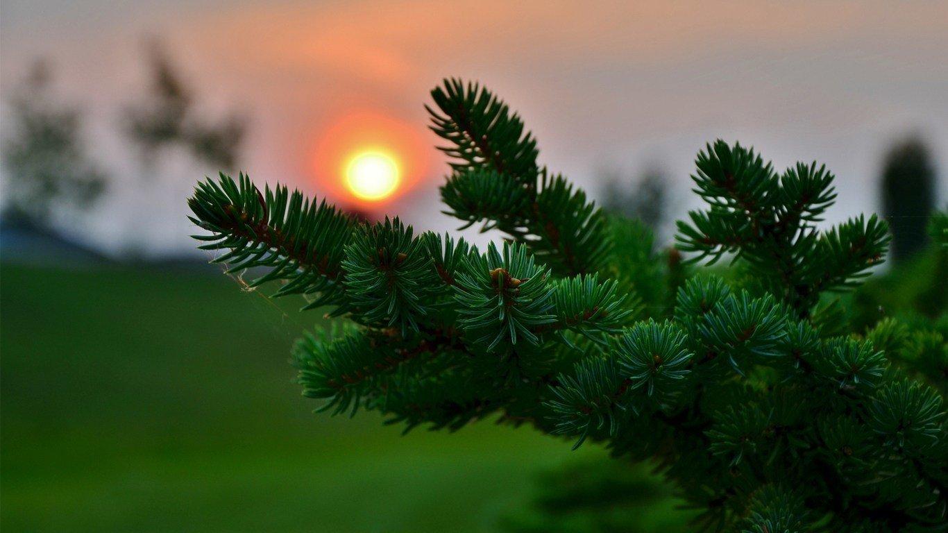 Ağaç Falı Nedir Ağaç Anlamları Nelerdir