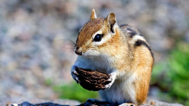 珍しい小動物の種類5選|ペットで飼育できる小動 …