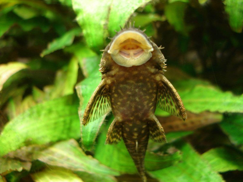 camda-cuce-vatoz